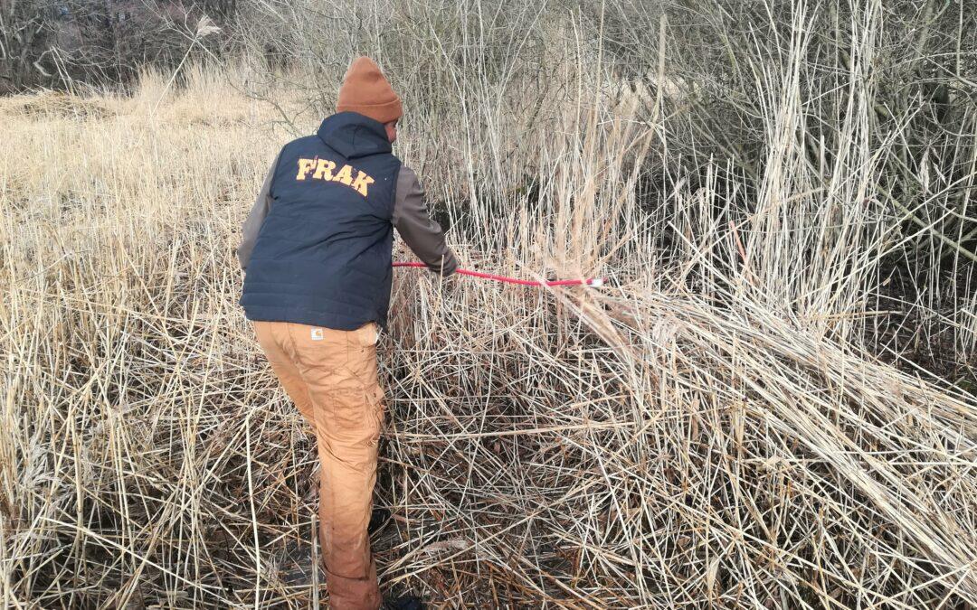 FRAK'ere bruger iskold vinterferie på at øge biodiversiteten på Amager Fælled