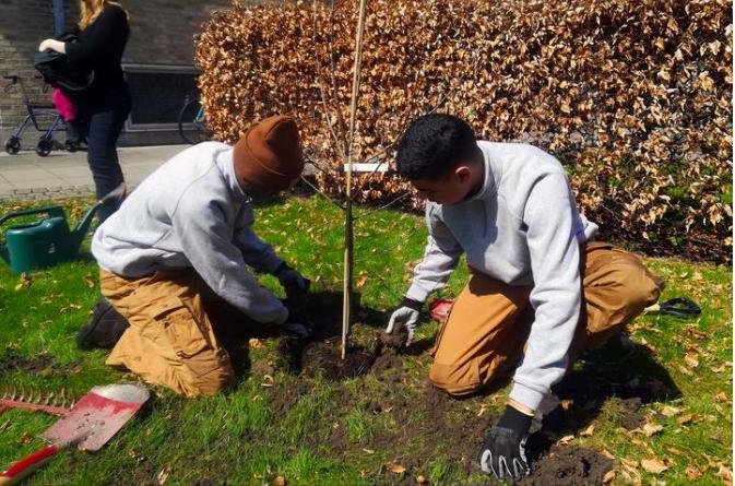 FRAK og Københavns Kommune gør byen grønnere med gratis træer